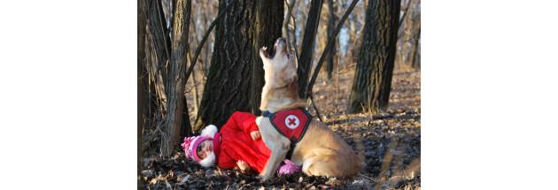 Kutyákkal az Életért Alapítvány